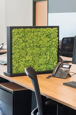 Creëer met planten een veilige werkplek